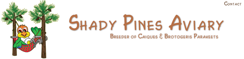 Shady Pines Aviary, Breeder of Caiques and Brotogeris Parakeets