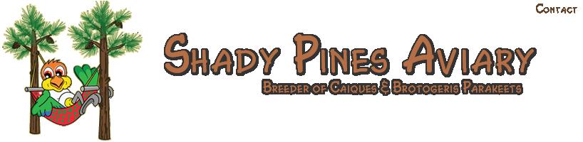 Caique Breeder - White bellied & Black headed Caiques